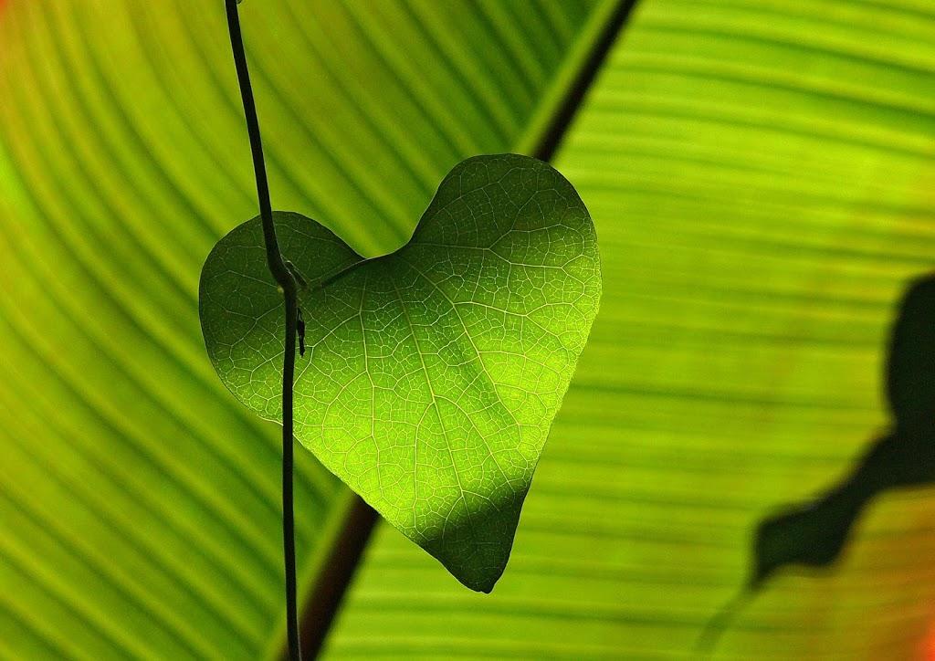 ...und noch einmal Liebe