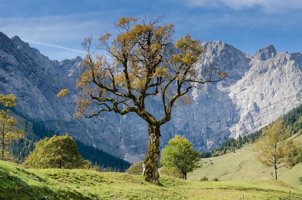 """""""Das Kraft Impuls Bild"""" und was es mit Bäumen zu tun hat!"""